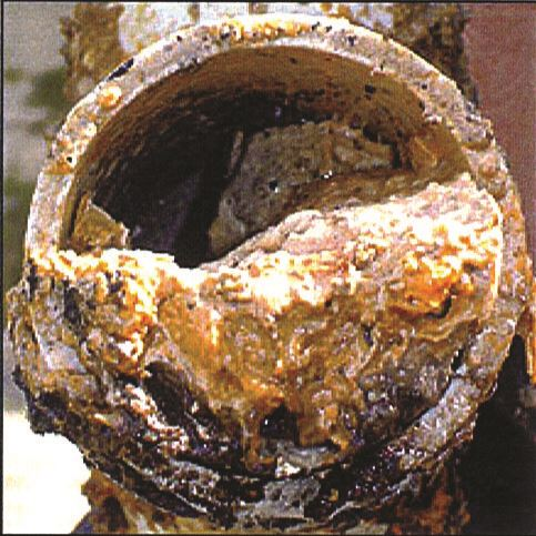 Grease in sewer pipe